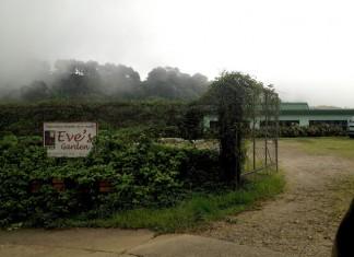 EVES Garden