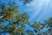 baguio city moratorium on cutting trees